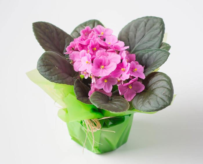 Vaso de Violeta para Presente
