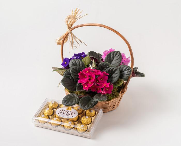 Cesta com 3 Violetas e Chocolates
